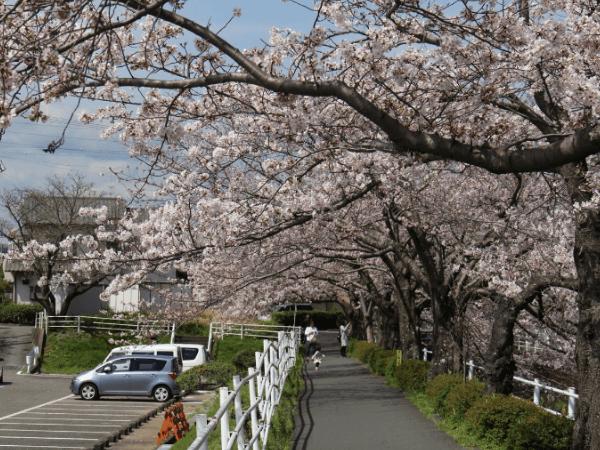 静岡でおすすめのカーセックススポット01