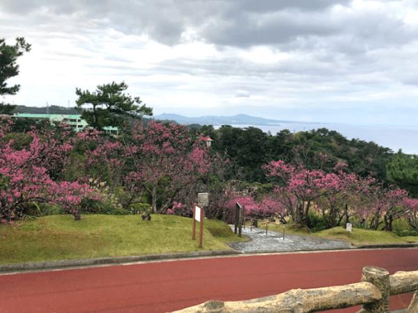 沖縄でセフレとカーセックス2